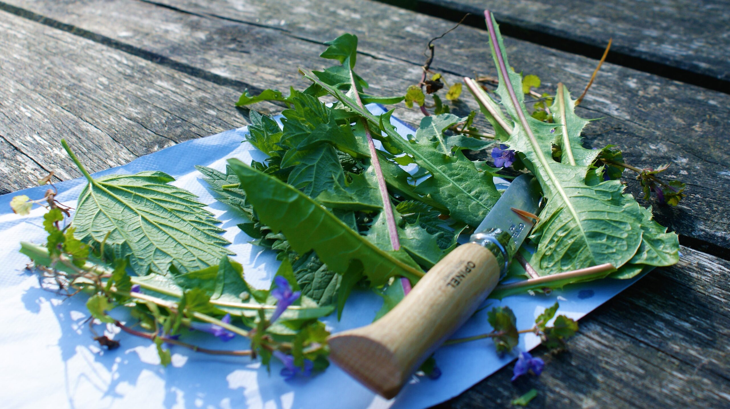 Foraging Workshops with Julia Behrens